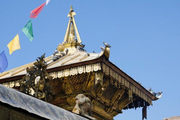 Joga w Indiach i Nepalu 2013